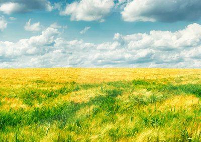 Field, Germany - Jennifer Vahlbruch